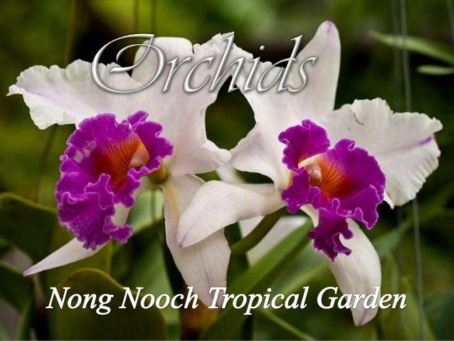 Orchids (Nong Nooch Botanical Garden)