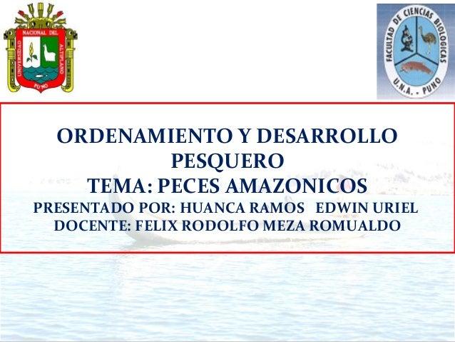 ORDENAMIENTO Y DESARROLLO           PESQUERO    TEMA: PECES AMAZONICOSPRESENTADO POR: HUANCA RAMOS EDWIN URIEL  DOCENTE: F...