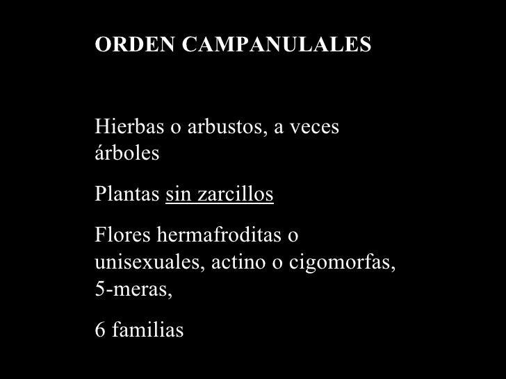 Orden Campanulales (Vinculado...)