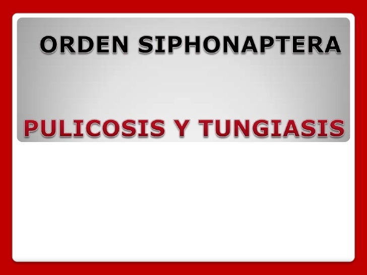 Orden siphonaptera