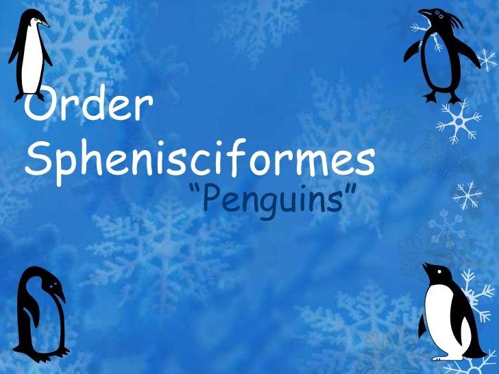 Order Sphenisciformes