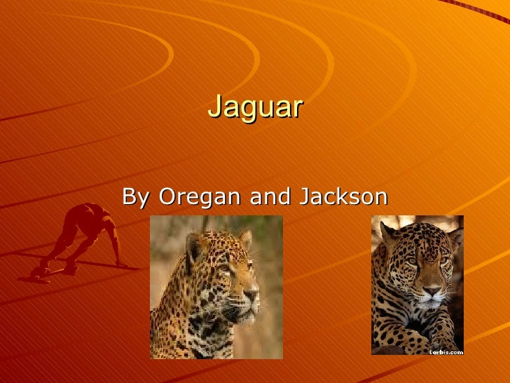 Jaguar By Oregan and Jackson