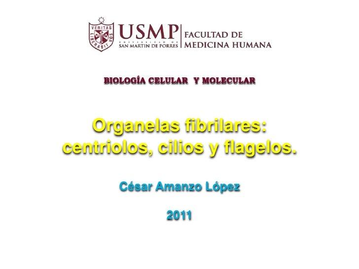 Organelas fibrilares 2011 (pp_tminimizer)