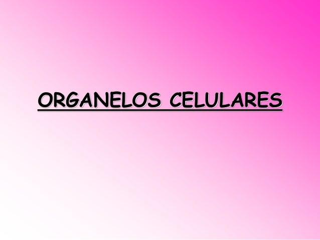 ORGANELOS CELULARES