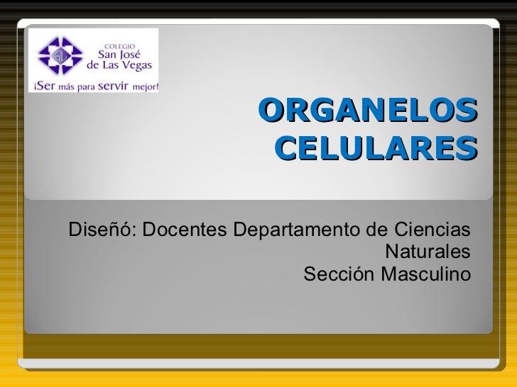 ORGANELOS CELULARES Diseñó: Docentes Departamento de Ciencias Naturales Sección Masculino