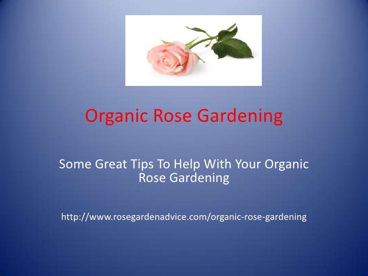 Organic Rose Gardening <br />Some Great Tips To Help With Your Organic Rose Gardening<br />http://www.rosegardenadvice.com...