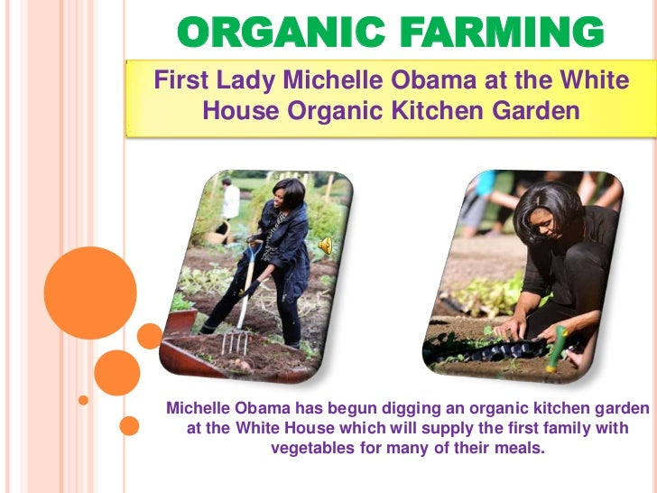 ORGANIC FARMINGFirst Lady Michelle Obama at the White    House Organic Kitchen GardenMichelle Obama has begun digging an o...
