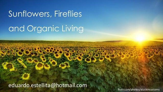 Sunflowers, fireflies and organic living