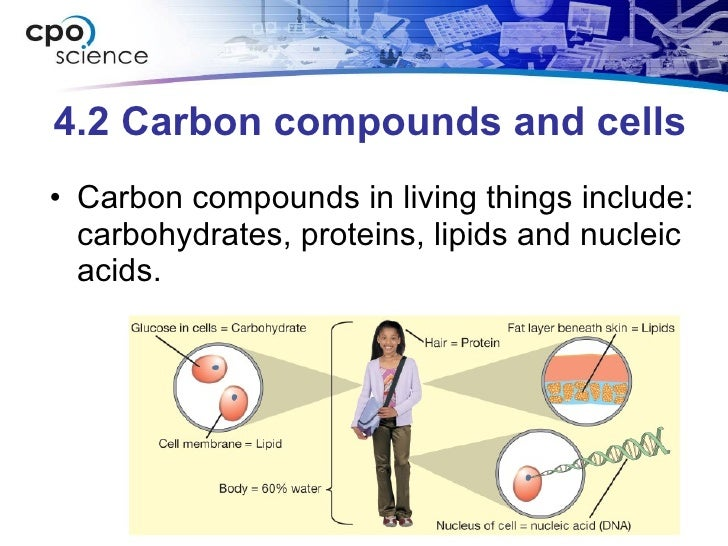 4.2 Carbon compounds and cells <ul><li>Carbon compounds in living things include: carbohydrates, proteins, lipids and nucl...