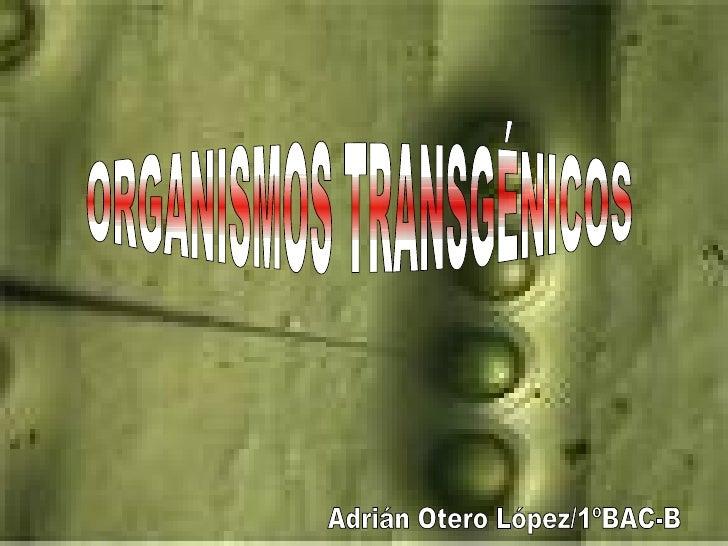 Presentacion  Transgenicos