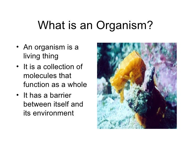 What is an Organism? <ul><li>An organism is a living thing </li></ul><ul><li>It is a collection of molecules that function...