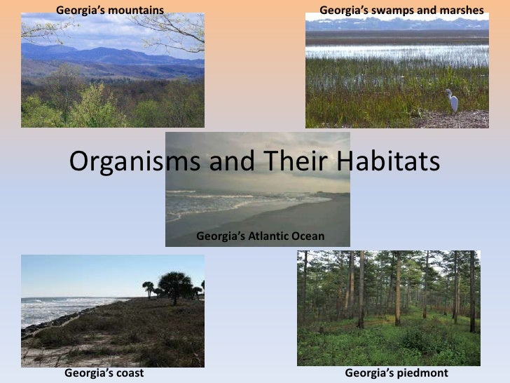 Unit 1<br />Organisms and Their Habitats<br />Georgia's mountains<br />Georgia's swamps and marshes<br />Georgia's Atlanti...