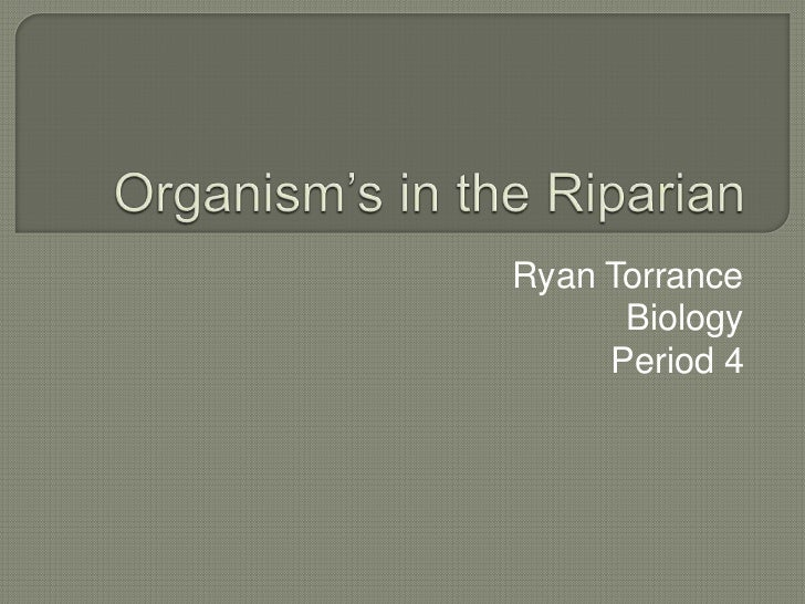 Organism's in the Riparian <br />Ryan Torrance<br />Biology<br />Period 4<br />