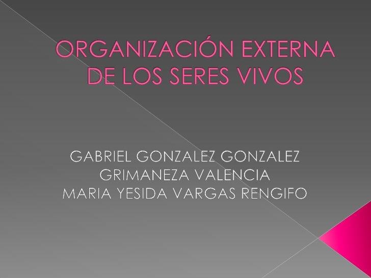 ORGANIZACIÓN EXTERNA DE LOS SERES VIVOS<br />GABRIEL GONZALEZ GONZALEZ<br />GRIMANEZA VALENCIA<br />MARIA YESIDA VARGAS RE...