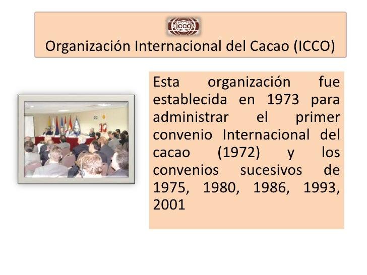 Organización internacional del cacao (icco)