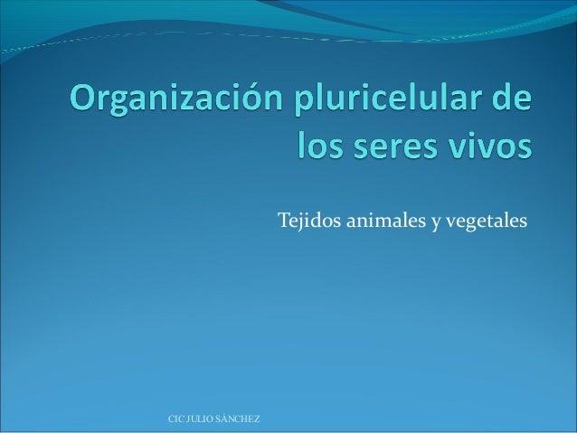 Organización pluricelular de los seres vivos