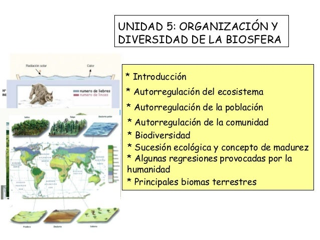 UNIDAD 5: ORGANIZACIÓN YDIVERSIDAD DE LA BIOSFERA * Introducción * Autorregulación del ecosistema * Autorregulación de la ...