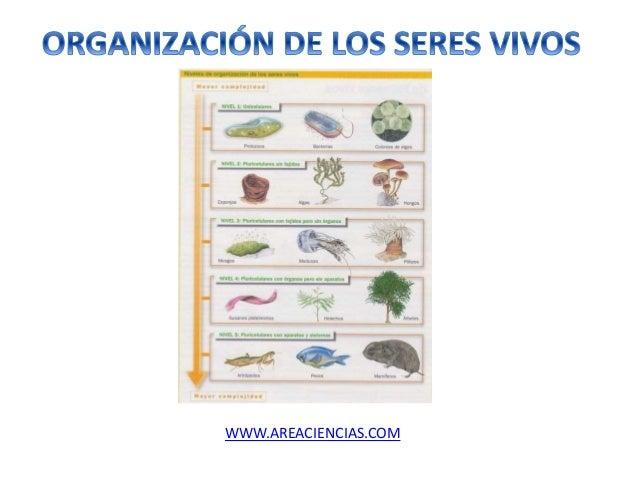 WWW.AREACIENCIAS.COM