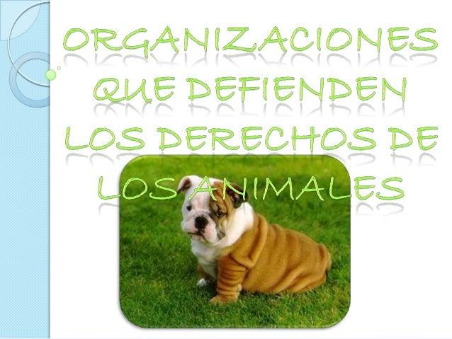 Visión Vegana, Sociedad en        Acción AntispecismoSomos una organización sin fines de lucro, estamos en contra de todo ...