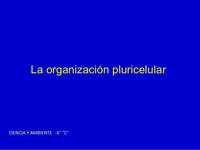 Organizacion pluricelular