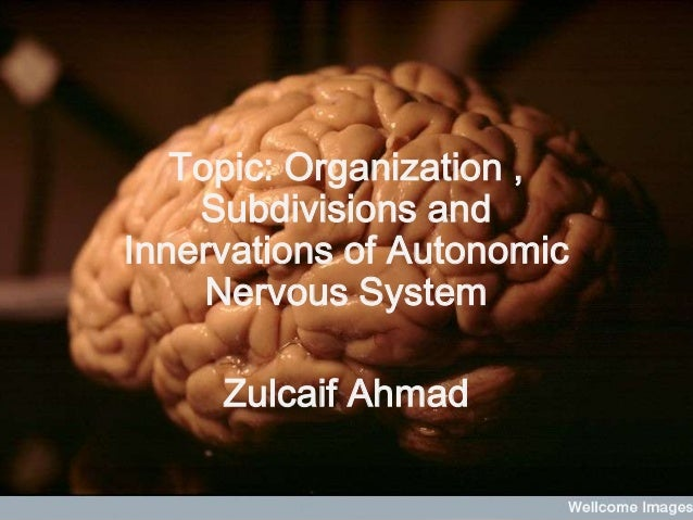 Topic: Organization ,    Subdivisions andInnervations of Autonomic     Nervous System     Zulcaif Ahmad
