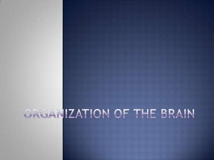 Organization Of The Brain