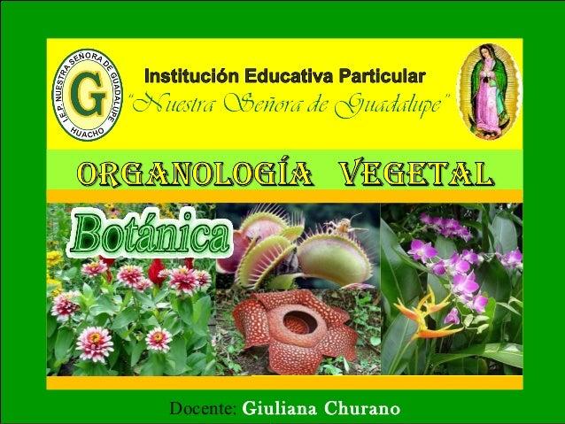 Docente: Giuliana Churano  Tinoco
