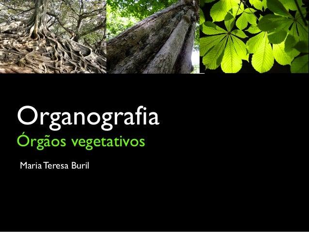 Organografia Órgãos vegetativos Maria Teresa Buril