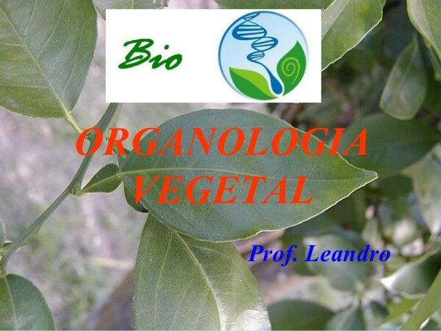 Prof. Leandro ORGANOLOGIA VEGETAL