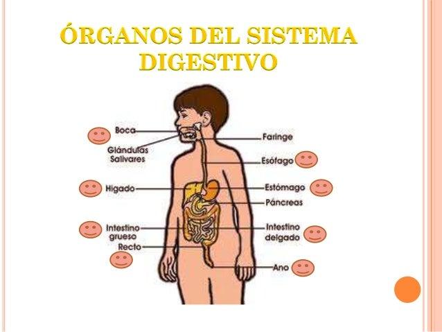 Sección inicial del tubo digestivo donde entran losalimentos al cuerpo formado por los dientes, lengua y lasglándulas sali...