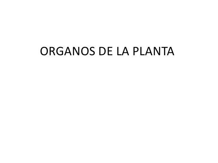 ORGANOS DE LA PLANTA