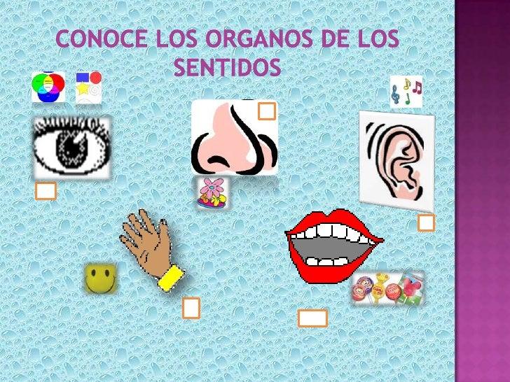 Organos de los sentidos for Mural de los 5 sentidos