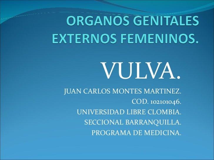 VULVA. JUAN CARLOS MONTES MARTINEZ. COD. 102101046. UNIVERSIDAD LIBRE CLOMBIA. SECCIONAL BARRANQUILLA. PROGRAMA DE MEDICINA.
