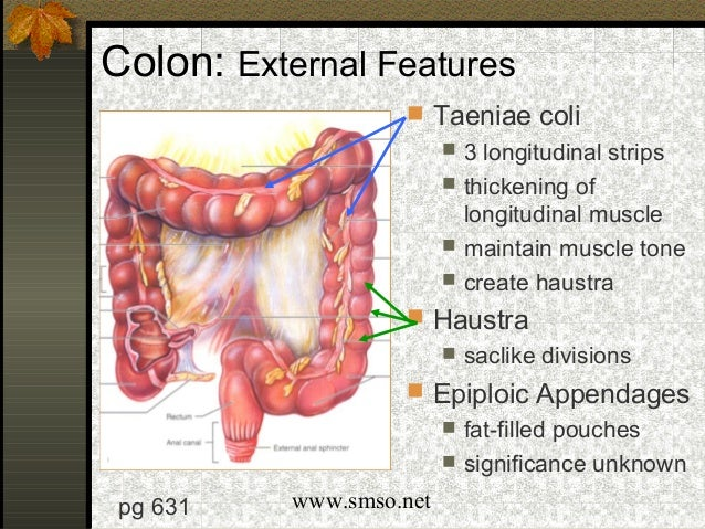 Image Gallery teniae coli
