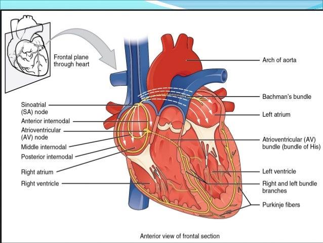 Anatomy organ systems