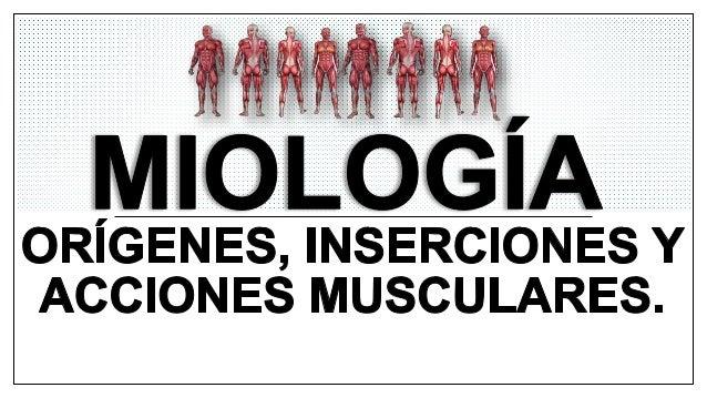 La miología es el estudio de los músculos y del tejido muscular. El músculo es un órgano macizo que tiene la capacidad de ...