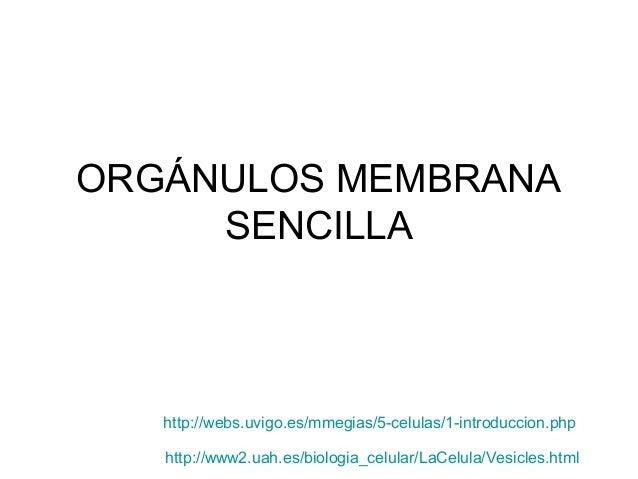 ORGÁNULOS MEMBRANA     SENCILLA   http://webs.uvigo.es/mmegias/5-celulas/1-introduccion.php   http://www2.uah.es/biologia_...