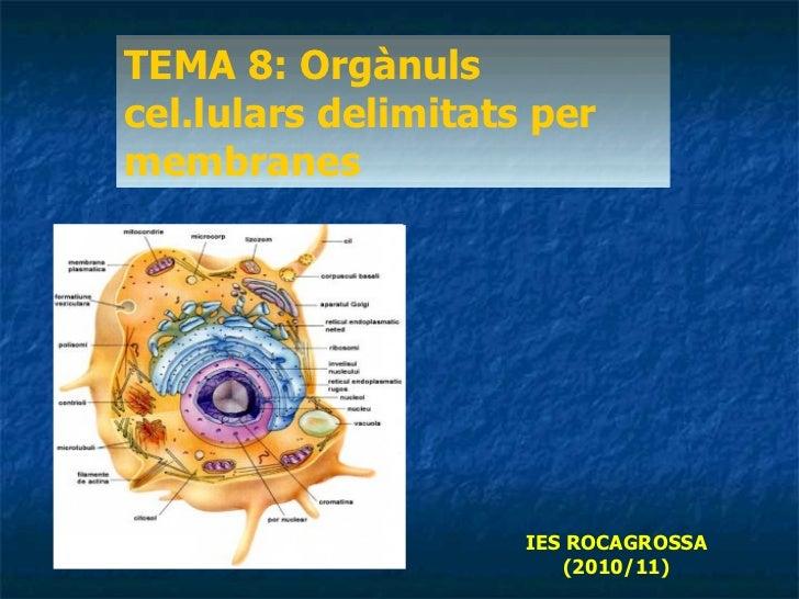 TEMA 8: Orgànuls cel.lulars delimitats per membranes IES ROCAGROSSA (2010/11)