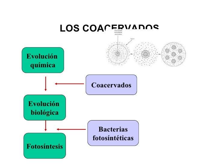 Evolucion Quimica y Biologica Evolución Química