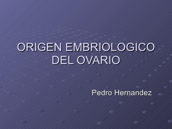 ORIGEN EMBRIOLOGICO DEL OVARIO Pedro Hernandez