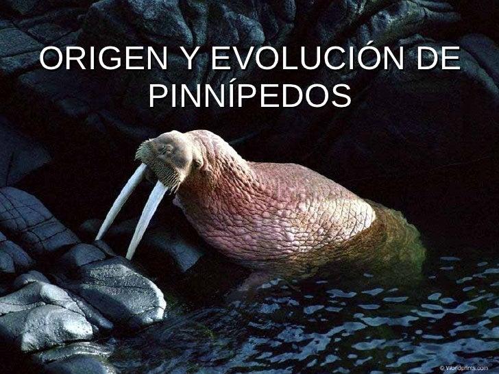 ORIGEN Y EVOLUCIÓN DE PINNÍPEDOS