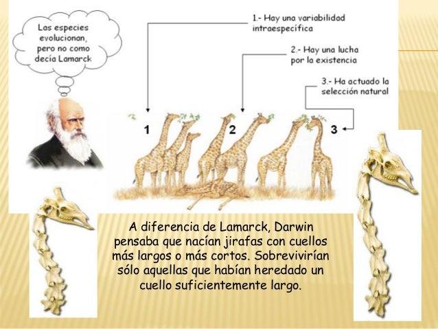 Teoria Sintetica Evolucion de la Jirafa Sintética de la Evolución la