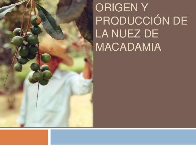 Origen y producción de la nuez de macadamia ppt