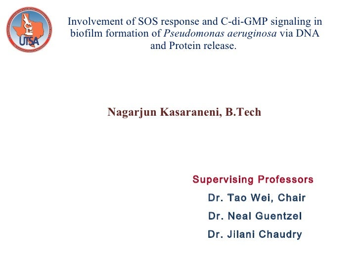 Powerpoint phd thesis defense biomedical ner