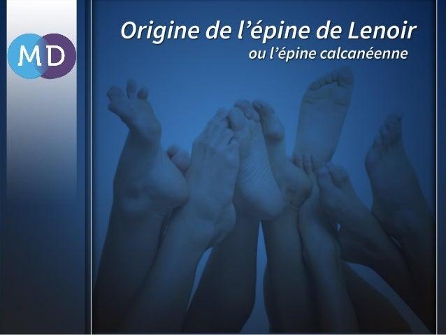 L'épine de Lenoir, également appelée l'épine calcanéenne, est une petite excroissance osseuse de l'os du talon, que l'on p...