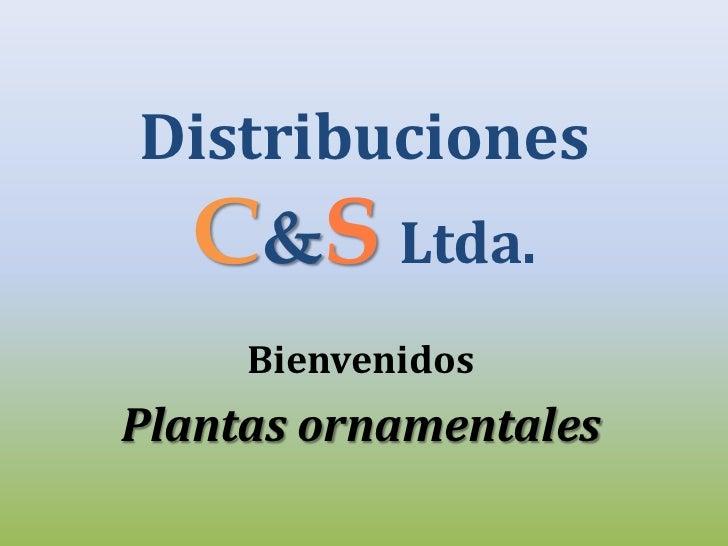 Distribuciones  C&S Ltda.     BienvenidosPlantas ornamentales