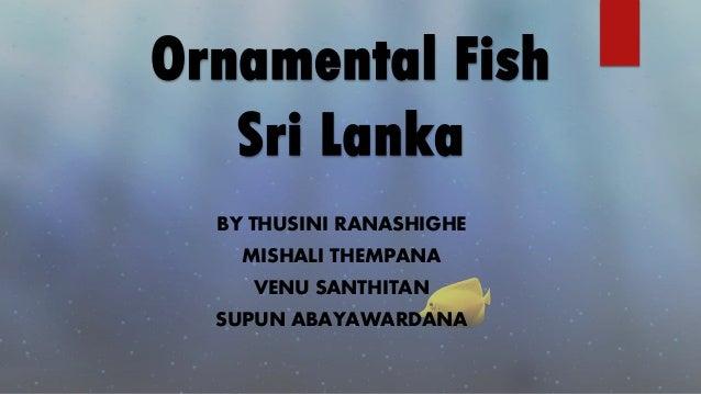 Ornamental Fish Sri Lanka BY THUSINI RANASHIGHE MISHALI THEMPANA VENU SANTHITAN SUPUN ABAYAWARDANA