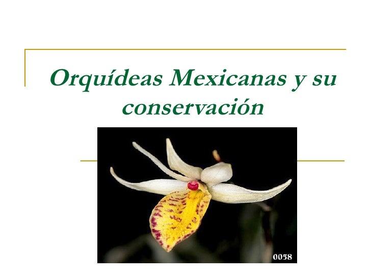 OrquíDeas Mexicanas Y Su ConservacióN