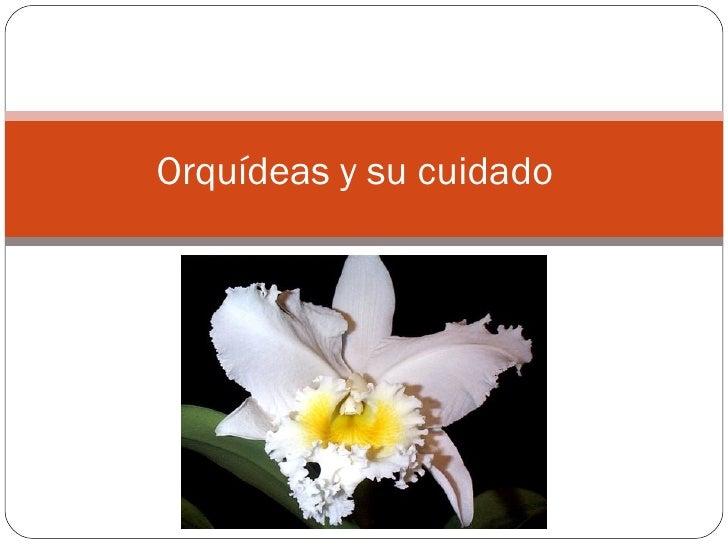 Orquídeas y su cuidado