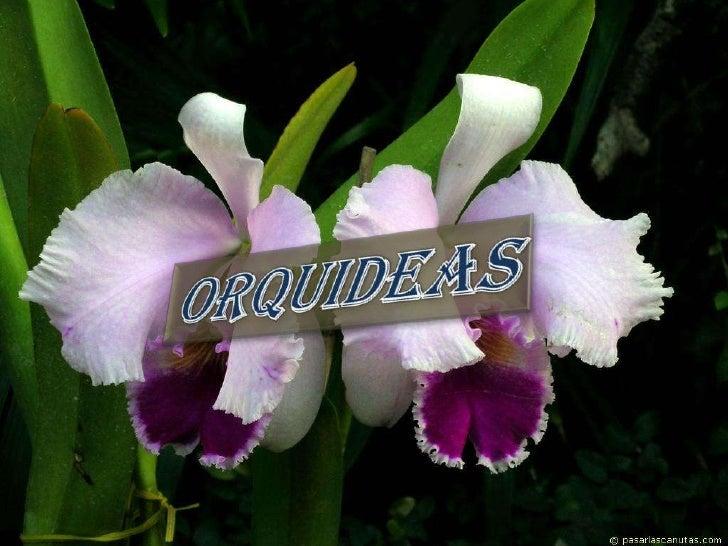 ORQUIDEAS<br />